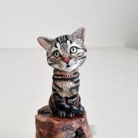Chats tigrés & bi-colore