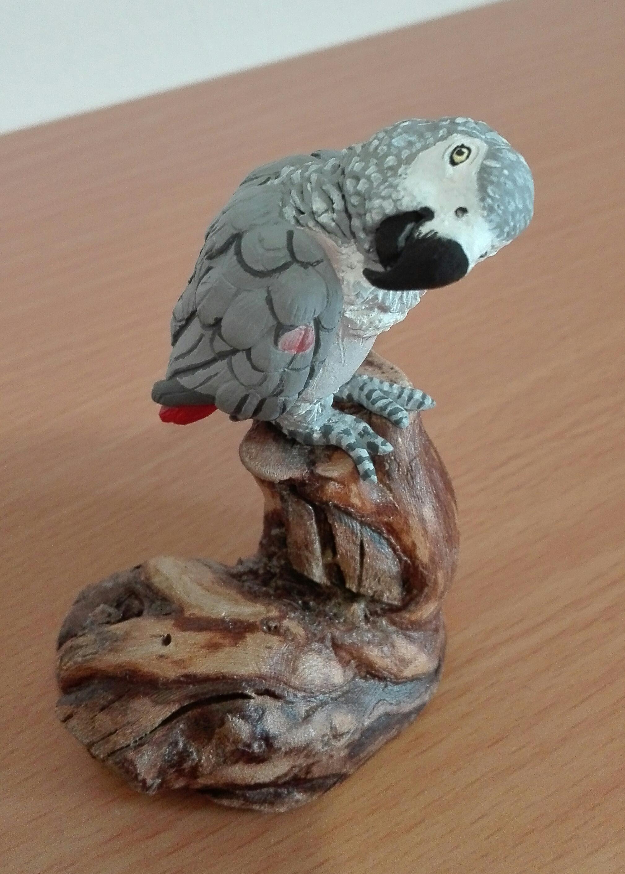 COCOTTE - le perroquet du Gabon